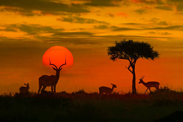 Go on an African Adventure with Contiki – Book Your TourToday!